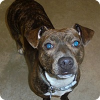 Adopt A Pet :: Mina - Elyria, OH