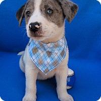Adopt A Pet :: Lucky Day - Irvine, CA