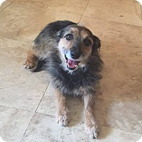 Adopt A Pet :: Polly - Phoenix, AZ