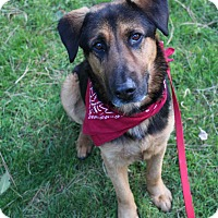 German Shepherd Dog Mix Dog for adoption in Los Angeles, California - BARRON - COURTESY