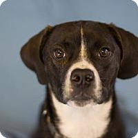 Adopt A Pet :: Zeus - Bradenton, FL