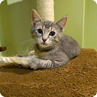 Adopt A Pet :: Oliver - The Colony, TX