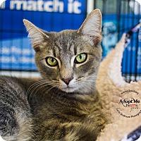 Adopt A Pet :: A..  Greyson - Mooresville, NC