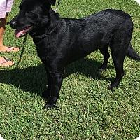Adopt A Pet :: Axl - Plainfield, CT