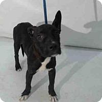 Adopt A Pet :: DOG #1 - Orlando, FL