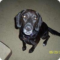 Adopt A Pet :: Riley - Coldwater, MI