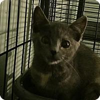 Adopt A Pet :: Miley - Maybrook, NY
