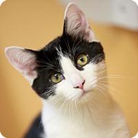 Adopt A Pet :: Khal - Kettering, OH
