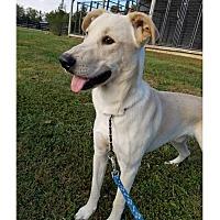 Adopt A Pet :: WRIGLEY - LaGrange, KY