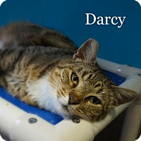 Adopt A Pet :: Darcy - West Des Moines, IA
