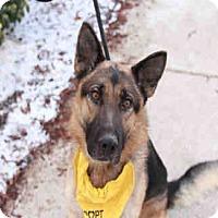 Adopt A Pet :: REX - Chicago Ridge, IL