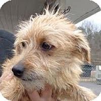Adopt A Pet :: Trevor Jr - Staunton, VA