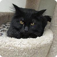 Adopt A Pet :: Ash - Gilbert, AZ