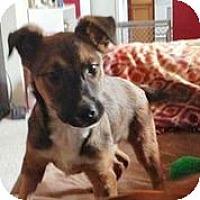 Adopt A Pet :: Rumball - Austin, TX