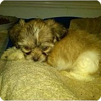 Adopt A Pet :: Chewy - Lake Forest, CA
