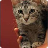 Adopt A Pet :: Aretha - Chicago, IL