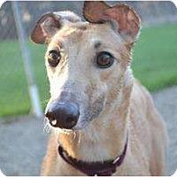 Adopt A Pet :: Jasmin (Jasmin's Cloud) - Chagrin Falls, OH