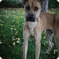 Adopt A Pet :: Catalina - Broomfield, CO