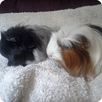 Adopt A Pet :: Puzzles - San Antonio, TX