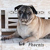 Adopt A Pet :: Phoenix - Tontitown, AR