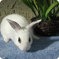 Adopt A Pet :: Bismark - Bonita, CA
