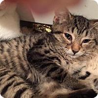 Adopt A Pet :: Brill - East Hanover, NJ