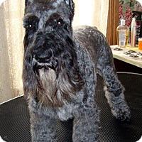 Adopt A Pet :: Skye - Southeastern, KS