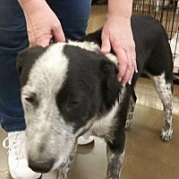 Adopt A Pet :: Gus - Fresno, CA