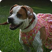Adopt A Pet :: Aunt Bee - Alpharetta, GA