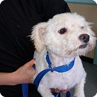 Adopt A Pet :: Mitzie-thrown away - Norwalk, CT