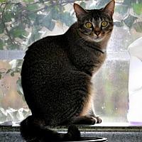Adopt A Pet :: Sheena - Siler City, NC