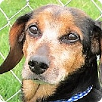 Adopt A Pet :: Willy - Germantown, MD