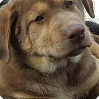 Adopt A Pet :: Beans - Saskatoon, SK