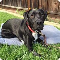 Adopt A Pet :: Bailey - San Francisco, CA