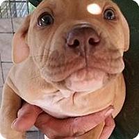 Adopt A Pet :: General - Gainesville, FL