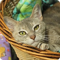 Adopt A Pet :: Darby - Naperville, IL