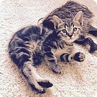 Adopt A Pet :: Sam - Denver, CO