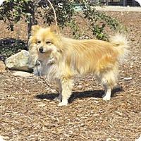 Adopt A Pet :: Simba - Yreka, CA