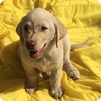 Adopt A Pet :: sienna tammie sunshine barley - carlsbad, CA