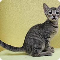 Adopt A Pet :: Roger - Benbrook, TX