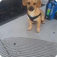 Adopt A Pet :: Kirby - Fresno CA, CA