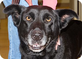 Labrador Retriever Mix Dog for adoption in Spokane, Washington - Zoe