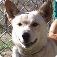Adopt A Pet :: Luca (Needs foster) - Washington, DC