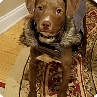 Adopt A Pet :: Coco - Gillsville, GA