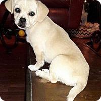 Adopt A Pet :: Snowflake - Fort Atkinson, WI