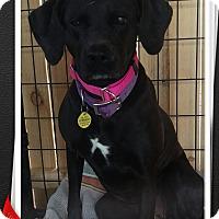 Adopt A Pet :: Ebony - Apache Junction, AZ