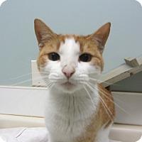 Adopt A Pet :: Hannibal - Kingston, WA