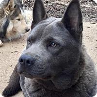 Adopt A Pet :: Ash - Memphis, TN