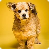 Adopt A Pet :: Hedwig - MEET ME - Bedminster, NJ