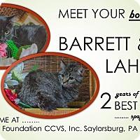 Adopt A Pet :: Lahela - Saylorsburg, PA